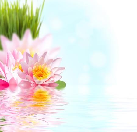 Beautiful pink lotus flower floating in water photo