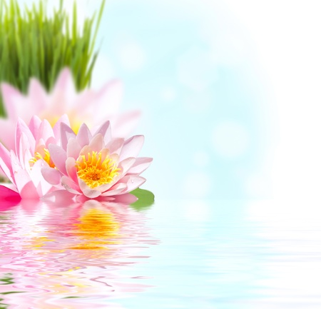 pink lotus: Beautiful pink lotus flower floating in water
