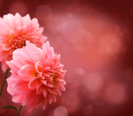 Floral border with pink Dahlia photo
