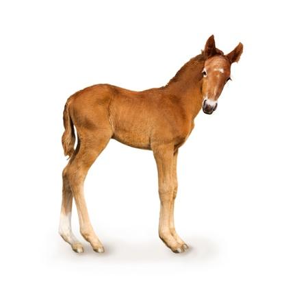 Newborn foal (only 4 days)