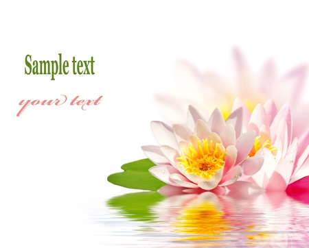 Pink lotus flower floating in water photo