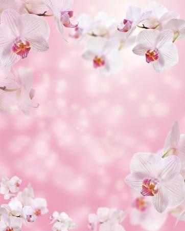 bordes decorativos: Frontera floral con orquídeas Foto de archivo