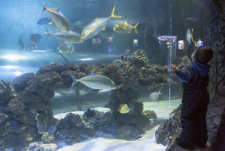 a huge aquarium and baby