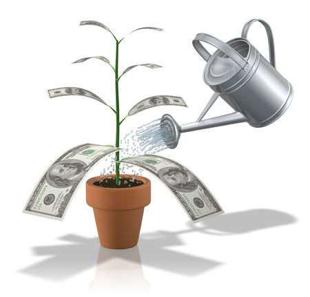 watering can: Money plant
