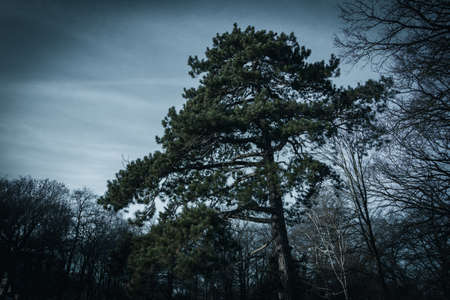 A tree in a moody sense in a wooded area in Malmö, Sweden, during winter sunset.
