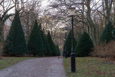 A path bordered with cone shaped topiary on a cold January day in a park in Malmö, Sweden