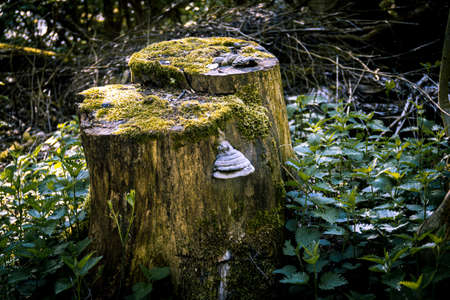 An old tree stump covered in moss and fungus. Seen as the sunlight shines through the leaves of the thick forest.