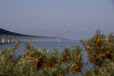 The Öresund bridge on a warm summer morning wiht some green and orange plants in the foreground 版權商用圖片