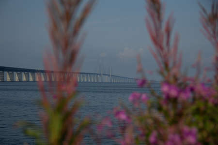 The Öresund bridge seen from land between some purple flowers on a warm summer or spring morning in Malmö, Sweden