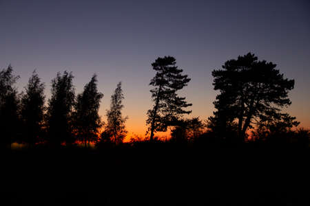 The tall trees look like silhouettes towards the glowing sky as the summer sun sets over Malmö, Sweden 스톡 콘텐츠