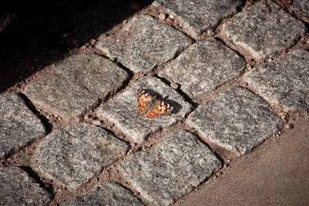 A single orange butterfly has landed on the sunlit warm cobblestones on a small street in Malmö, Sweden