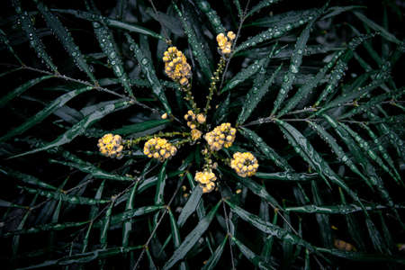 A dark green, moody plant and leaves, with droplets of water, and yellow flowers