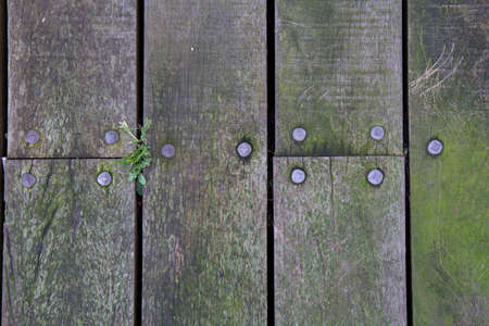 Top down view of wooden plank with texture, moss, algea, cracks and nails on an outdoor walkway