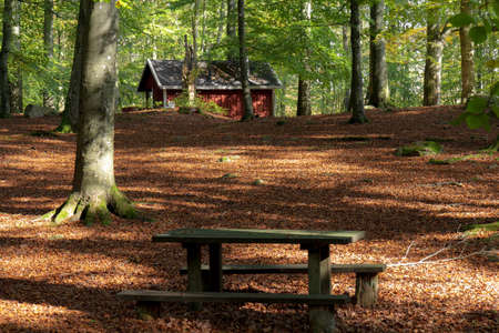 A bench stands empty in an autumn colored forest in the national park Söderåsen in southern Sweden. The forest floor is covered in brown leaves, lit by the sun Foto de archivo