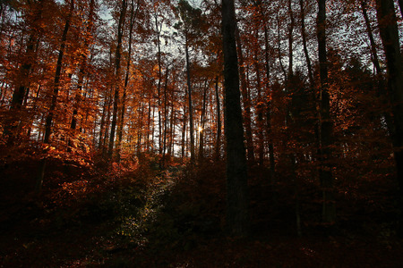 peaking: Sunlight peaking through dense forest