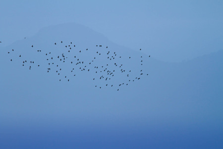 barely: Inspirational background of a hazy sunset with a flock of starlings migrating in front of a barely visible mountain in blue tones