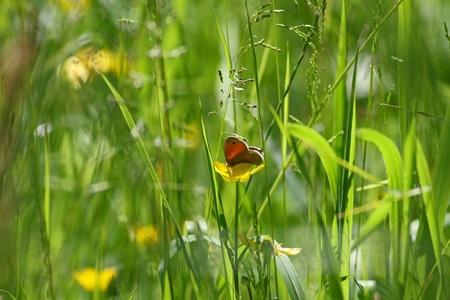 野草: 背の高い野草の小さな蝶 写真素材