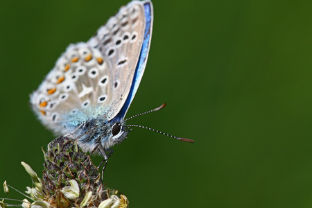 room for your text: little blue butterfly against green background with room for your text Stock Photo