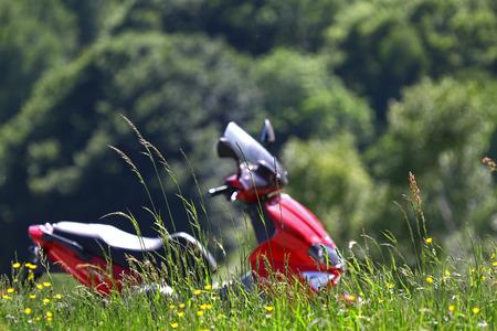 野草: 背景に赤いスクーターと野草
