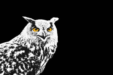ornithology: Black and white owl, Bubo Bubo, with yellow eyes on black background illustration