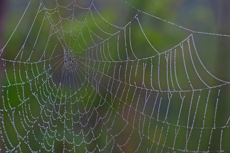 Spider cobweb decorated with pearls of rain water against a blurred green background Stock Photo