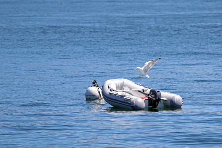 inflatable boat: Dingy inflatable boat tied to a buoy with seagulls flying on it