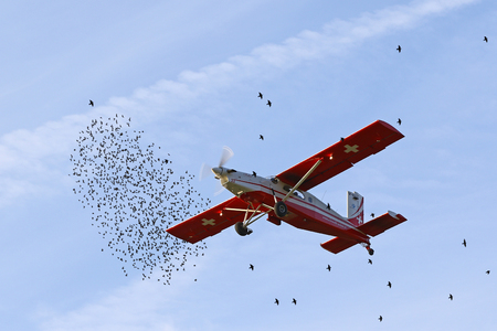 felix: A Patrouille Suisse pilatus Porter Felix taking off with paratroopers in the middle of flocks of migrating starlings in Locarno, Switzerland, on October 28, 2016