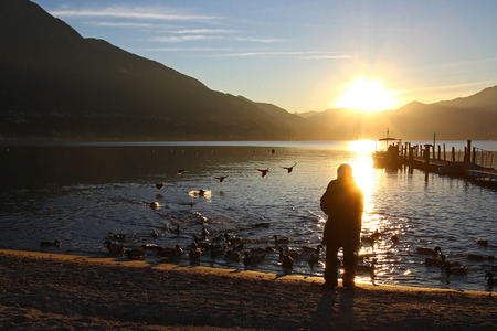 Ducks flying in the sunset toward a lonely senior woman as she feeds mallards by a lake Stock Photo