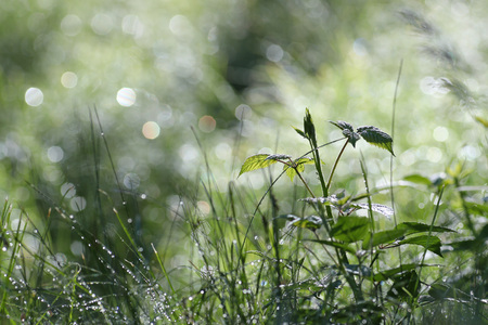 Raindrops in wild grass reflecting sunlight spring background Фото со стока
