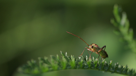 Bug on green plant against a blurred garden background