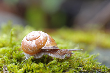 Snail over green lichens and moss