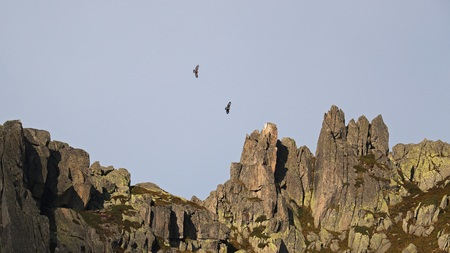 Rugged mountain peaks with two golden eagles, Aquila Chrysaetos, flying high in the distance Stock Photo