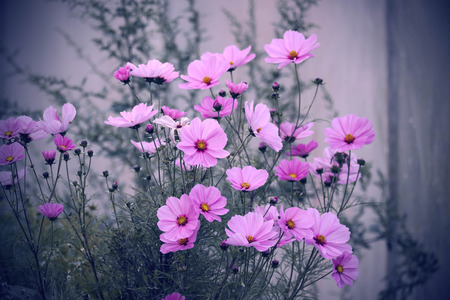 Purple and pink flowers on desaturated background