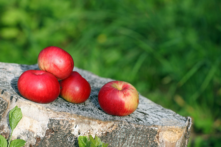Colorful apples on a cut tree trunk against a green background