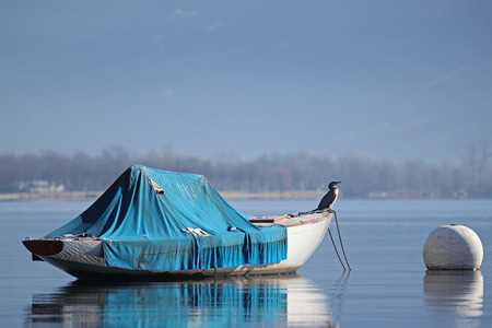 Old wooden sailboat moored for the winter with a great cormorant relaxing on its deck Stock Photo