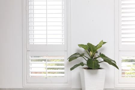 mur blanc de bureau, fenêtre et arbre vert.
