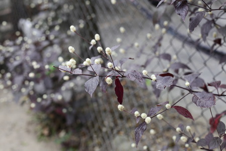beside: The flowers beside the fence.
