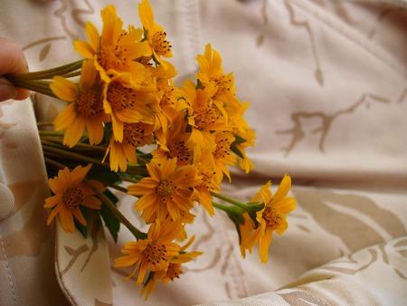 wild flower-Southern in Viet Nam. Stock Photo