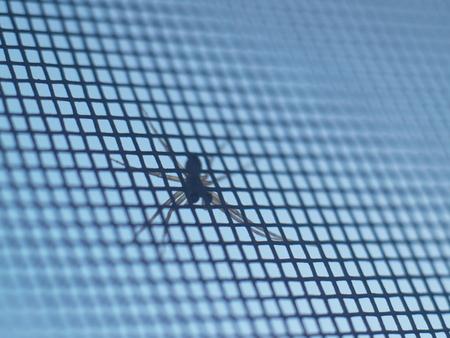 araneidae: Spider garden-spider (lat. Araneus) kind araneomorph spiders of the family of Orb-web spiders (Araneidae) sits on the web Stock Photo