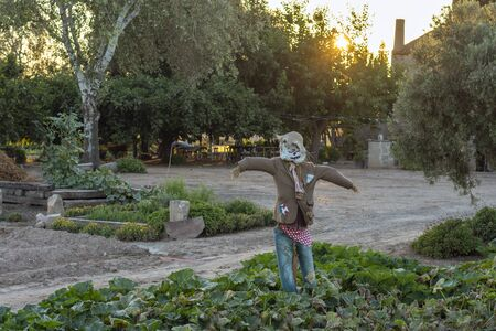 Scarecrow in the farm field at sunset