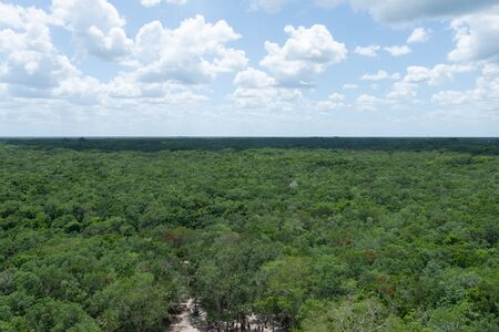 Panoramic view of the jungle of Mexico