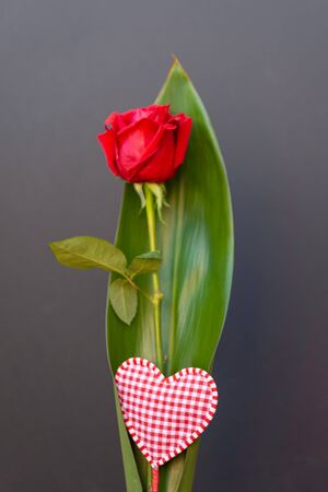 Red rose isolated from black background, Valentines Day, Mothers Day, Sant Jordi