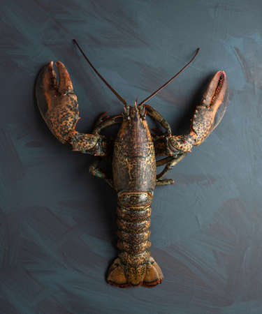 Fresh lobster on artistic background, concept of luxury, gourmet, quality fresh seafood