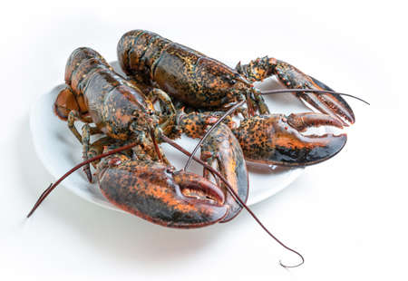 Two fresh lobsters on a white plate isolated from the background