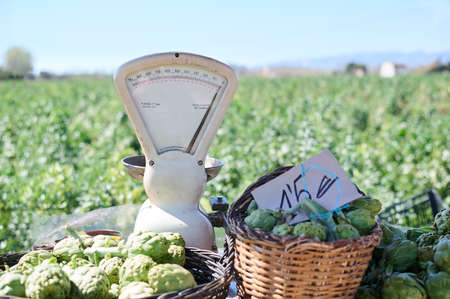 Weighing machine fresh vegetables at farmers markets Reklamní fotografie