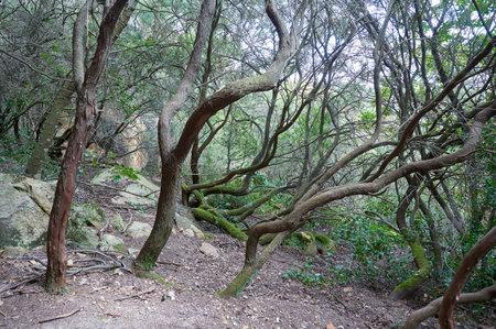 Vertical shot mountain trail, hiking trail Reklamní fotografie