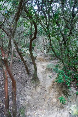 Mountain trail, hiking trail