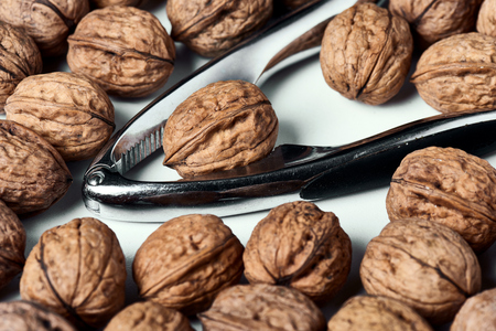 Walnut in shell group on a white table with a metal nut cracker. 写真素材