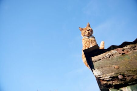 Ginger red cat sitting on a roof looking down at camera against a blue sky.