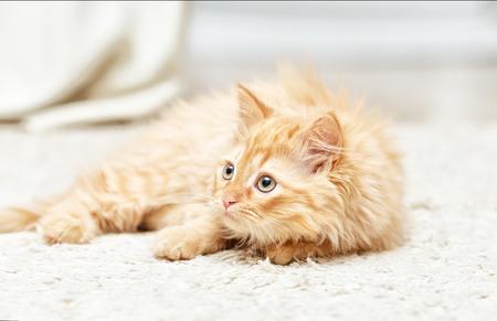 chaton rouge se trouve sur un tapis blanc